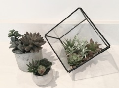 WithinWalls.com Plants